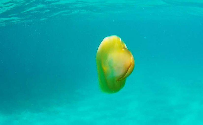 Video: Beware of the jellyfish