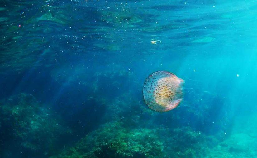 Video: Jellyfish